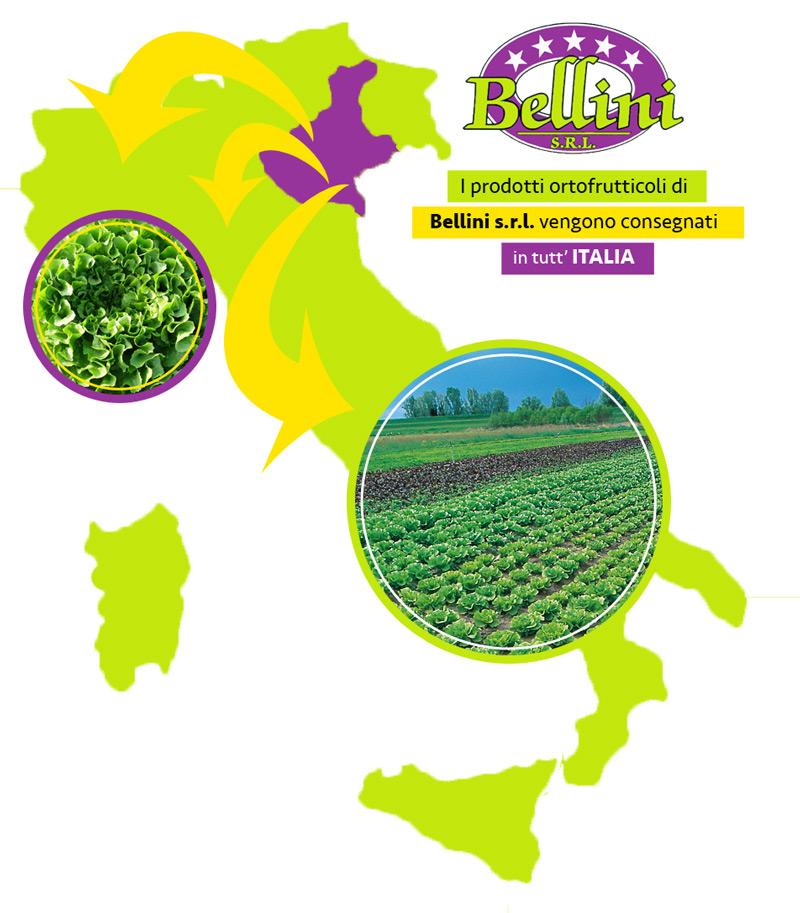Bellini Ortofrutta consegna in tutta Italia